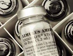 Kinetic Tubidimetric LAL